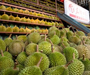 Learn about durian at this durian appreciation workshop