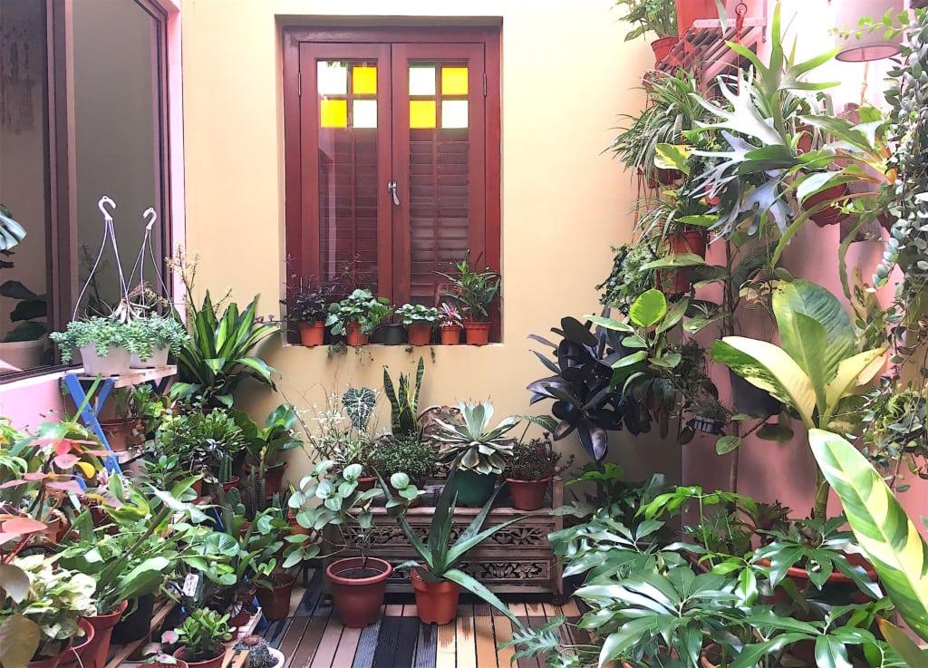 Where to buy houseplants: Tumbleweed
