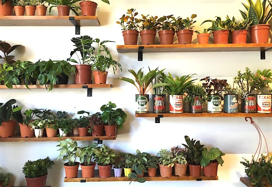 Where to shop houseplants: Tumbleweed