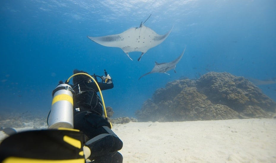 Swim amidst Manta Rays at Mergui Archipelago
