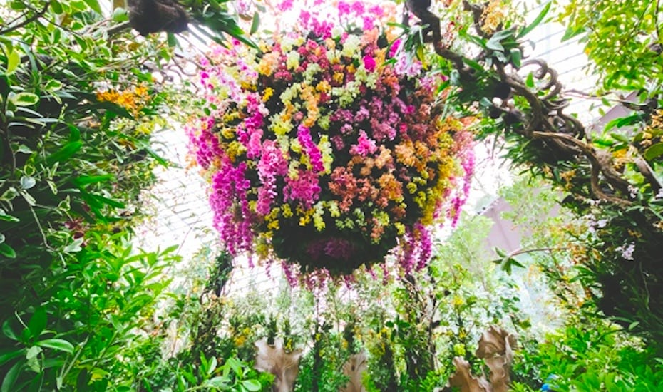 Explore the Orchid extravaganza at the Singapore Garden Festival