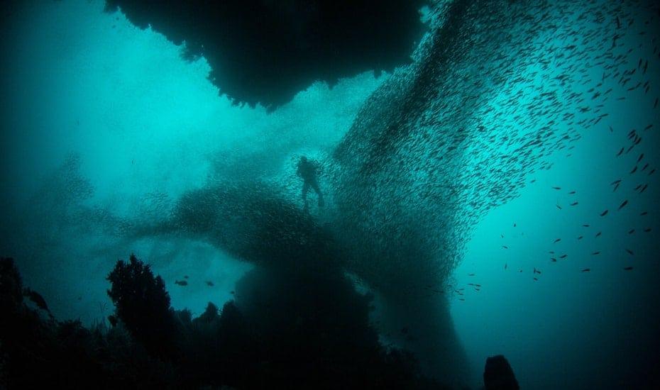 Raja Ampat in Indonesia is famous for the large amounts of marine life and you may easily find yourself getting swarmed