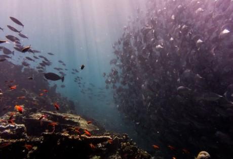 Pulau Sipadan is a Scuba DIver's paradise, boasting tons of marine life.