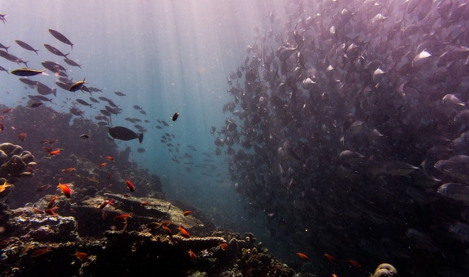 Best scuba diving sites in Southeast Asia: must-see coral reefs and wrecks