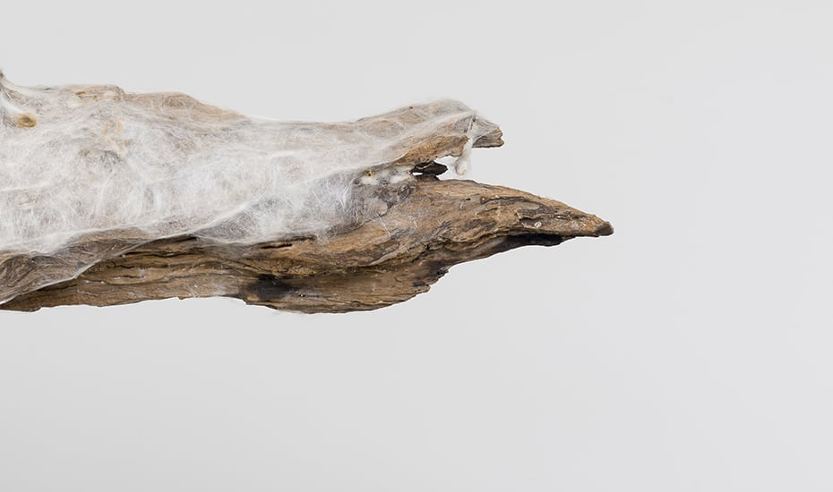 Trees of Life Exhibition: Knowledge in Material