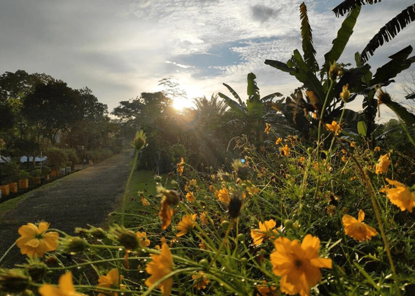 flower garden path | secret spots in singapore | bollywood vegies