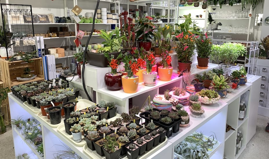 Easi Grow indoor plants | Guide to Chinatown, Singapore | Where to shop