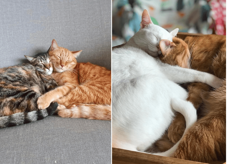 Cat cafés in Singapore: Purrfect spots for coffee, snacks, and cute kitties