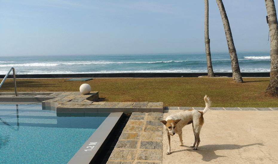 Sri Lanka villas   villas in Sri Lanka   Holiday Sri Lanka   Singapore to Sri Lanka   Why House boutique hotel   Tanamera Estate private villa