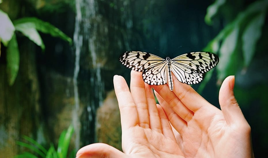 Flutter of wonder: Butterflies are descending on Singapore's largest outlet mall