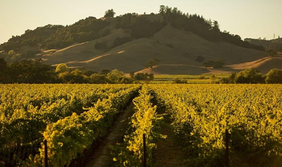 Wines of California – Tutored Tasting