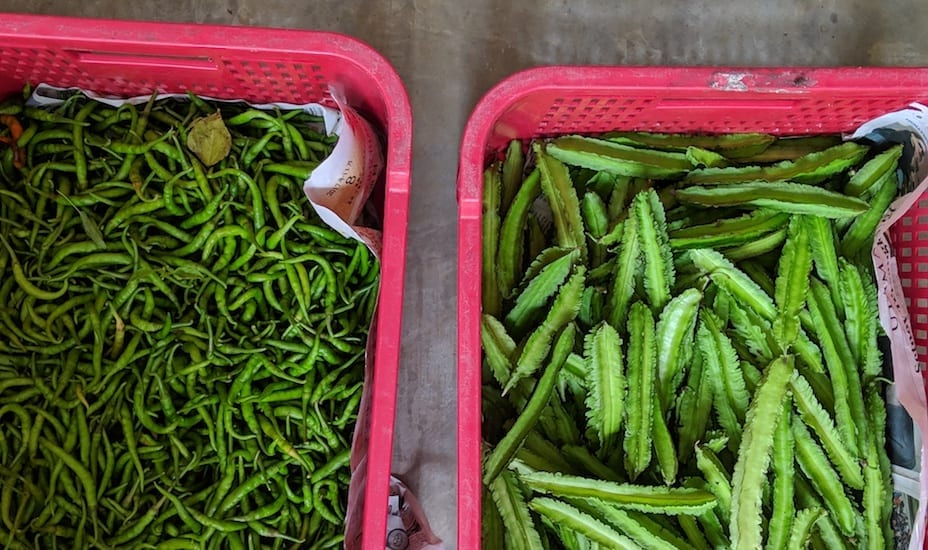 Chillies and wing beans grown on Cempedak Private Island's farm.