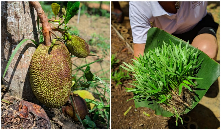 Fresh fruit, herbs, veggies and eggs come straight from Cempedak Private Island's own farm on Bintan.