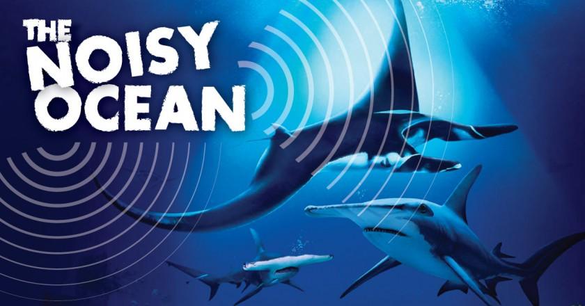 The Noisy Ocean!