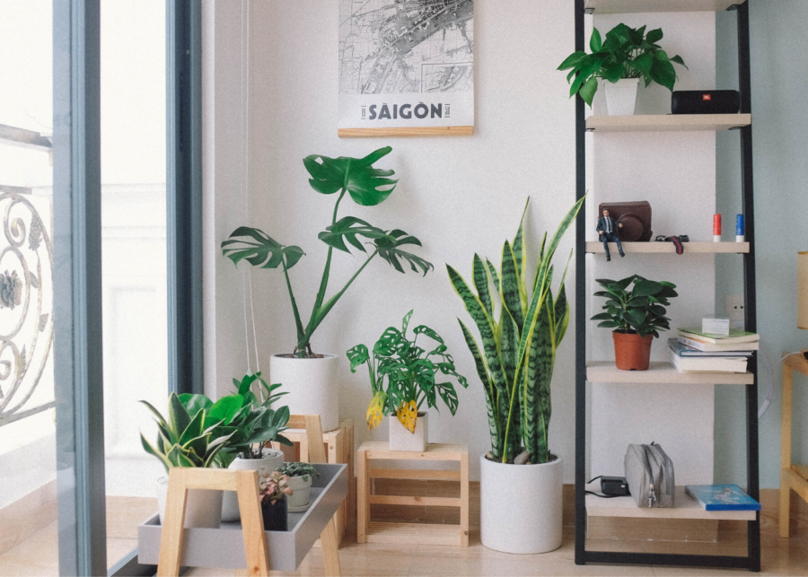 Plant stores and nurseries in Singapore to spruce up your lush indoor garden