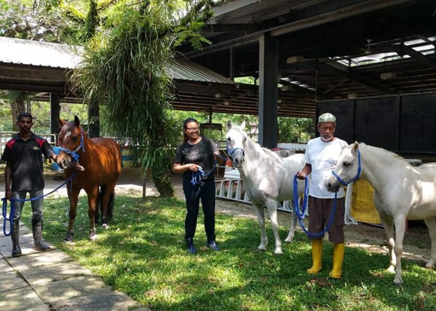 Volunteer in Singapore: Riding for the Disabled Association