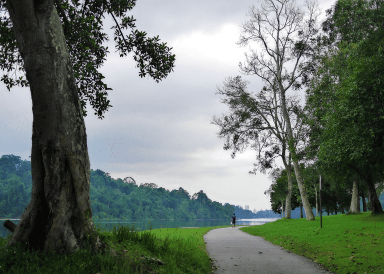 Yes, you can go hiking in Singapore: Nature trails to trek from Southern Ridges to Macritchie Reservoir