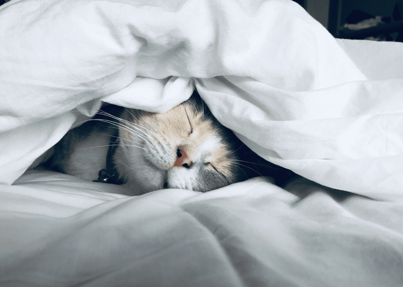 cat sleeping on bed | get enough sleep to boost your immunity