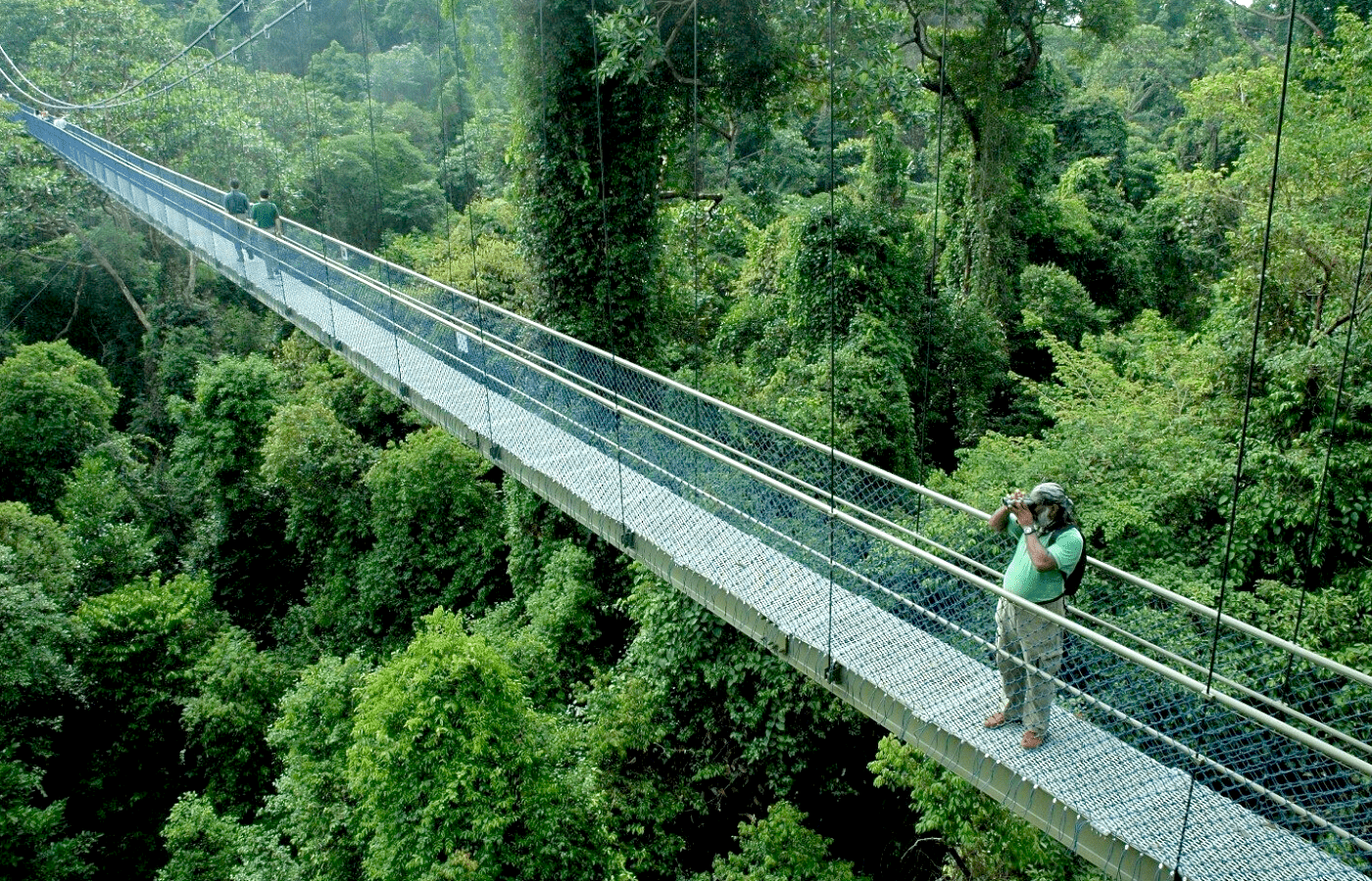 macritchie treetop walk for nature views