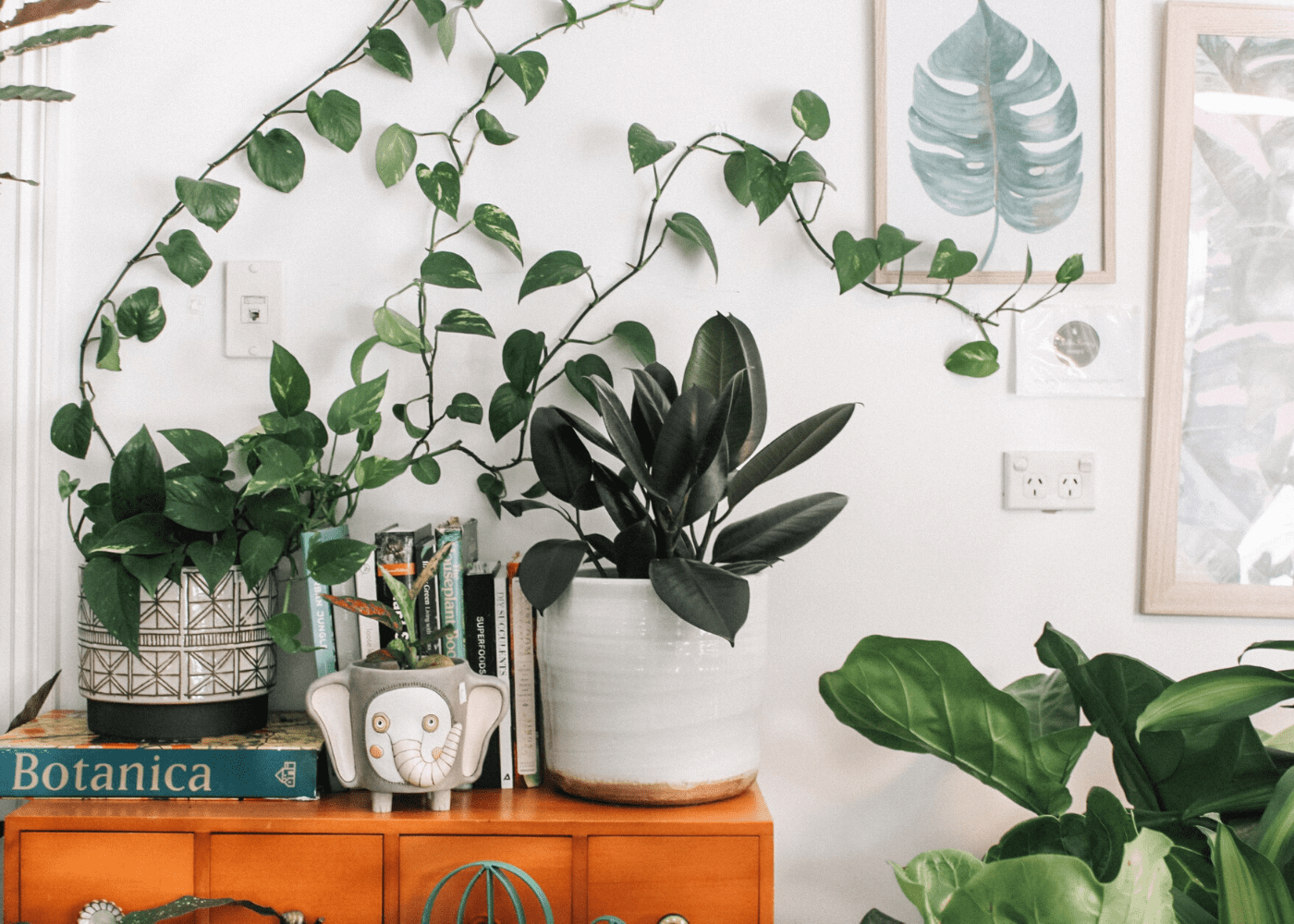 Bring the outdoors in with plants | redecorate your home