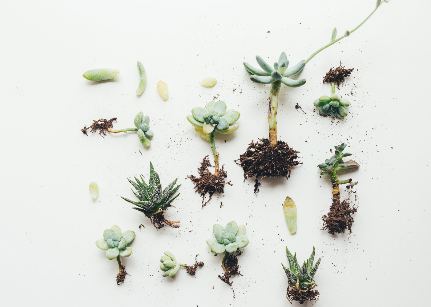 Plant parenthood: I tried caring for succulents during the circuit breaker and here's what I learned