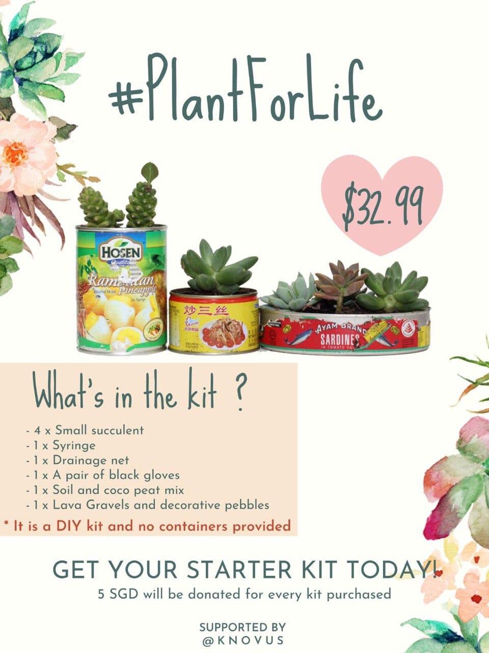 Knovus's Plant For Life Succulent Kit