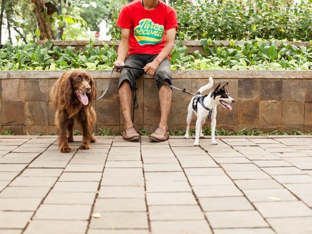 dogs park jakarta