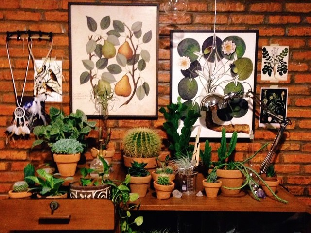 Go Green: Where to find terrariums and succulents