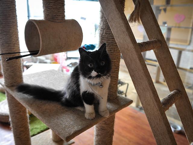 Smitten Kittens: Jakarta's Cat Cafes