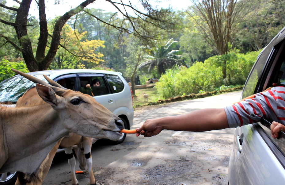 Fun things to do with your kids: A guide to family-friendly places to see animals in Jakarta