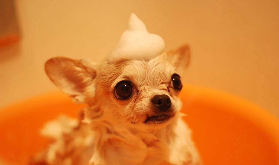 Pet Grooming in Jakarta: The best salon and spa services for your cats and dogs