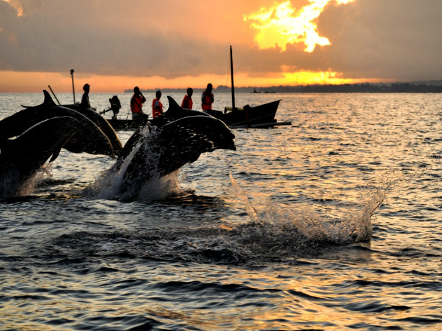 Bali Day Trips: Dolphin Watching