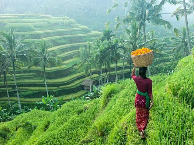 Bali Day Trips: Ubud