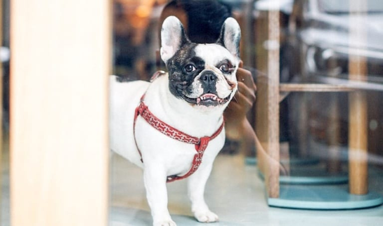 Dog-friendly restaurants, cafes and spaces: Where to hang out with your favourite pet in Jakarta