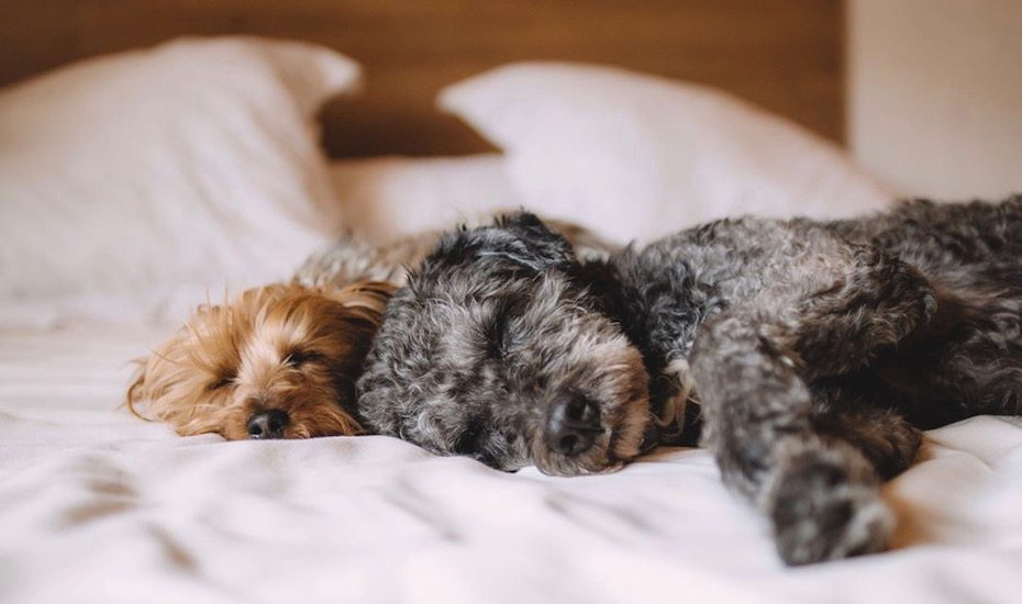 Foster a dog or cat | What to do during coronavirus quarantine