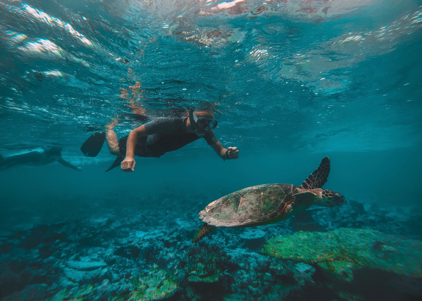 Turtle spotting while snorkelling in Nusa Lembongan and Nusa Ceningan in Bali, Indonesia