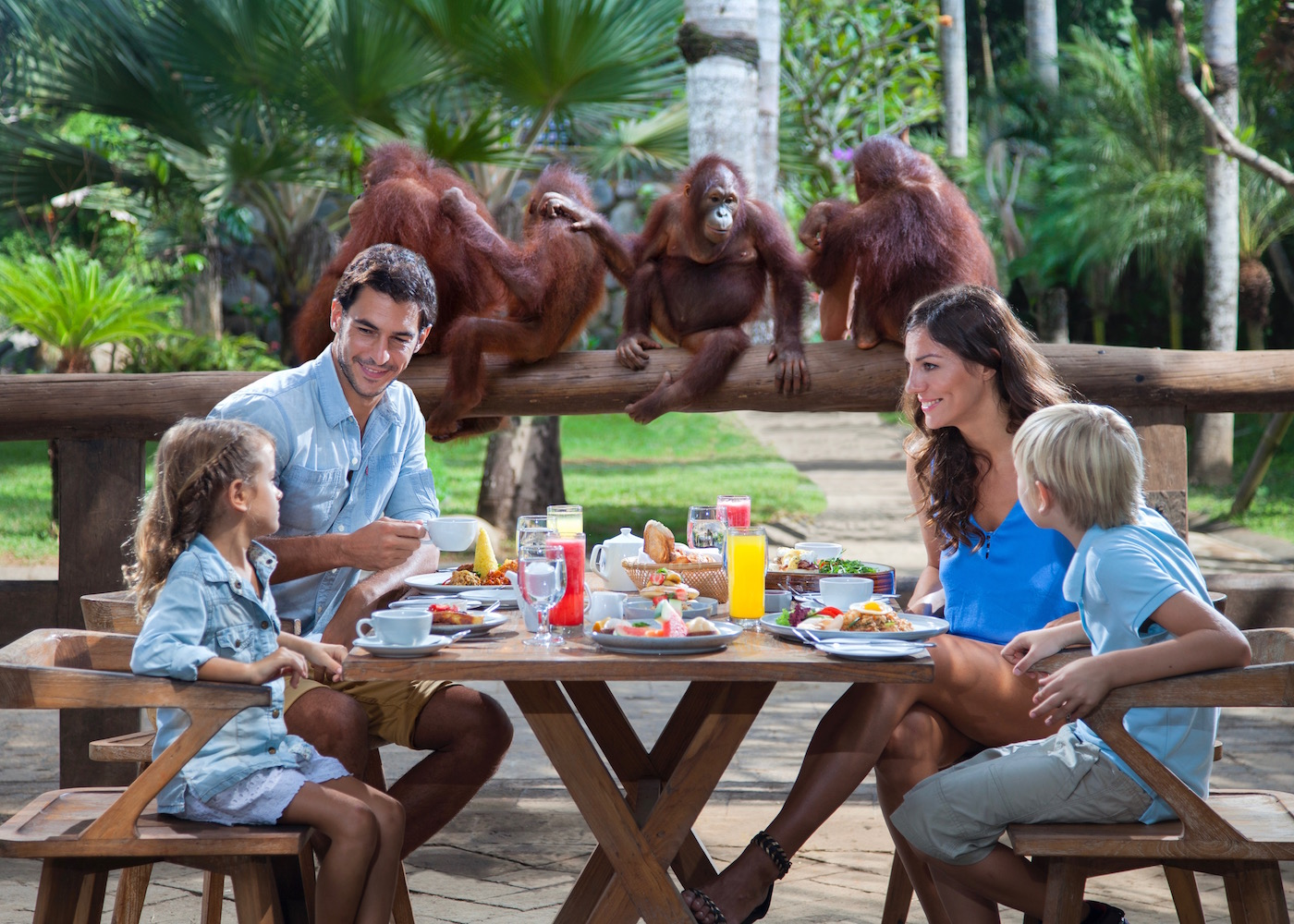 Family breakfast with orangutans at Bali Zoo in Gianyar (near Ubud) in Bali, Indonesia