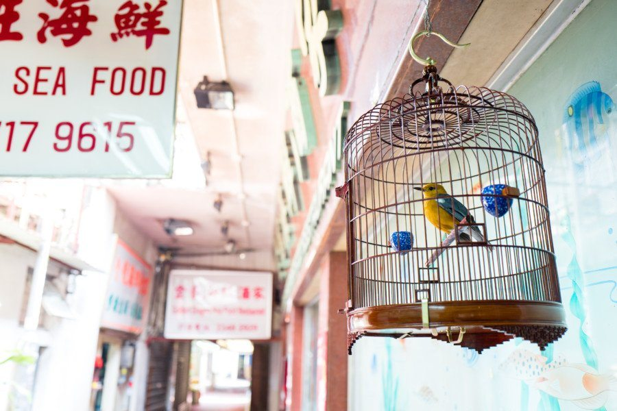 Lei Yue Mun fishing village birdcage
