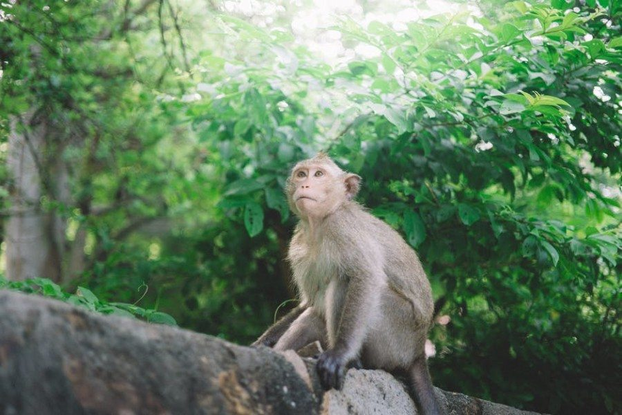 hiking hong kong monkey