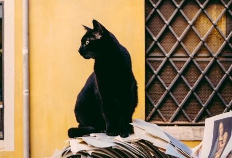 Hong Kong superstitions black cat
