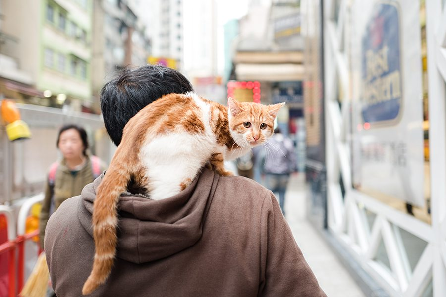 5 unscientific ways to relax in Hong kong cat riding human