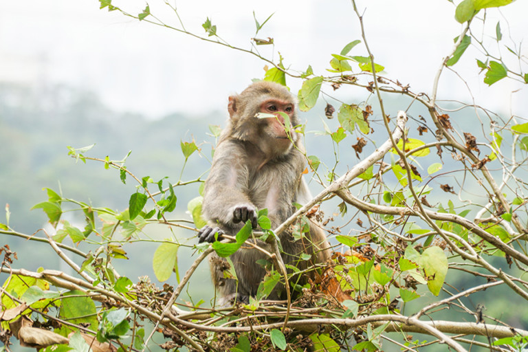 The Shing Mun Reservoir hike in the New Territories will have you sharing the path with monkeys