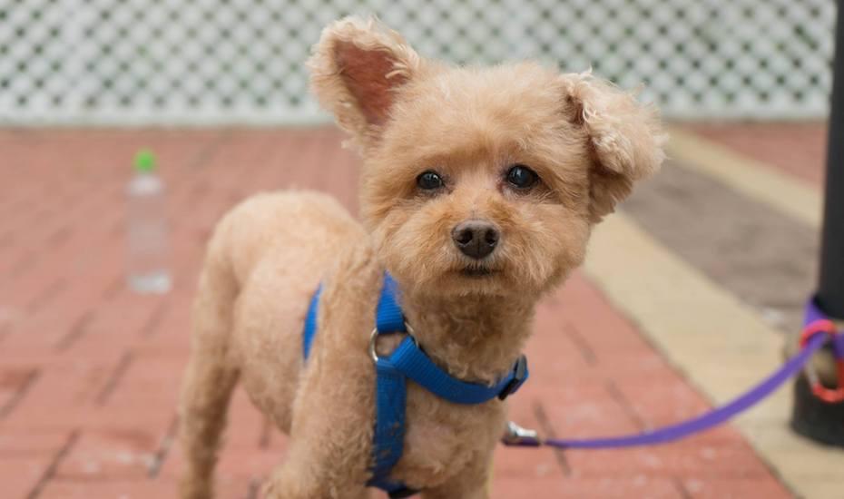 Adopt pets cat adoption Hong Kong Dog Rescue dog