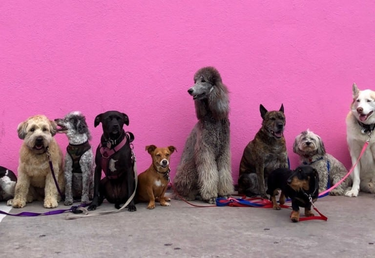 Enjoy time with your pooch! We're digging these dog-friendly cafés and restaurants in Hong Kong