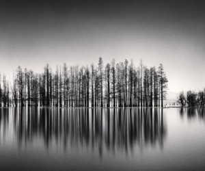 Philosopher's Tree by Michael Kenna art exhibitions in Hong Kong