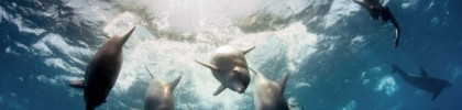 The Last Wilderness by Peter Marshall featuring Hanli Prinsloo A Wild Invitation Bottlenose Dolphins, Mozambique