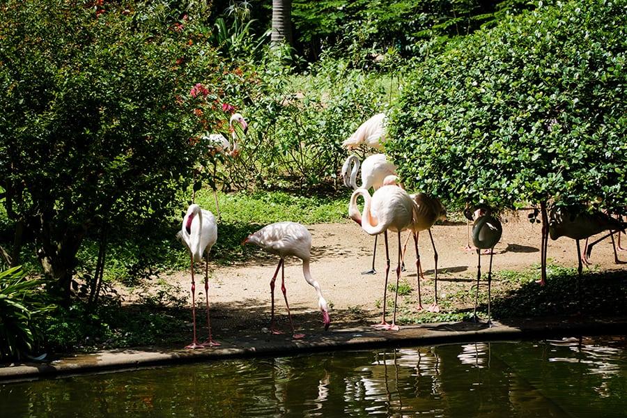 the mira hong kong tsim sha tsui flamingoes kowloon park