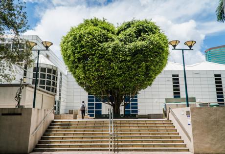 the mira hong kong Kowloon park heart tree