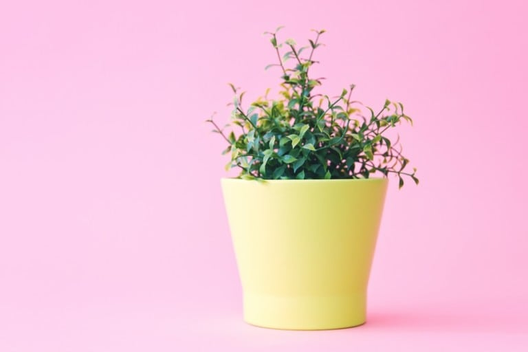 5 indoor plants for Hong Kong apartments that are easy to keep alive (despite the changing weather!)