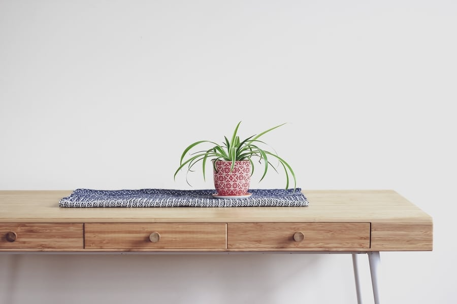 indoor plants for Hong kong apartments spider plant
